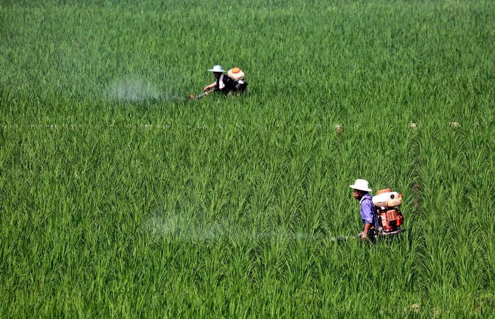 【通知】2020年第3批!这101个农药产品登记均已获得登记