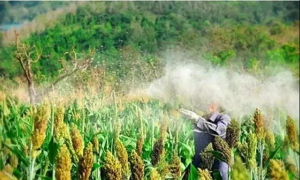 【农药行业】农业生产上11大农药使用问题,这些问题,你中了几个?