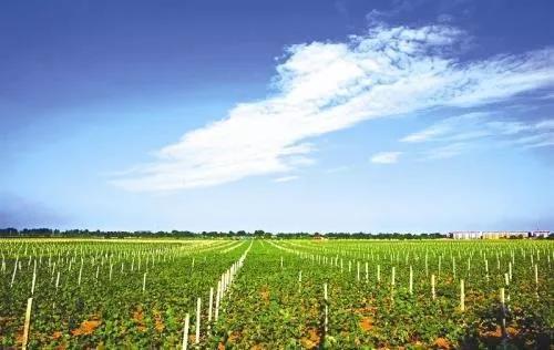 【政策】国家发改委:这些农业产业将被淘汰!