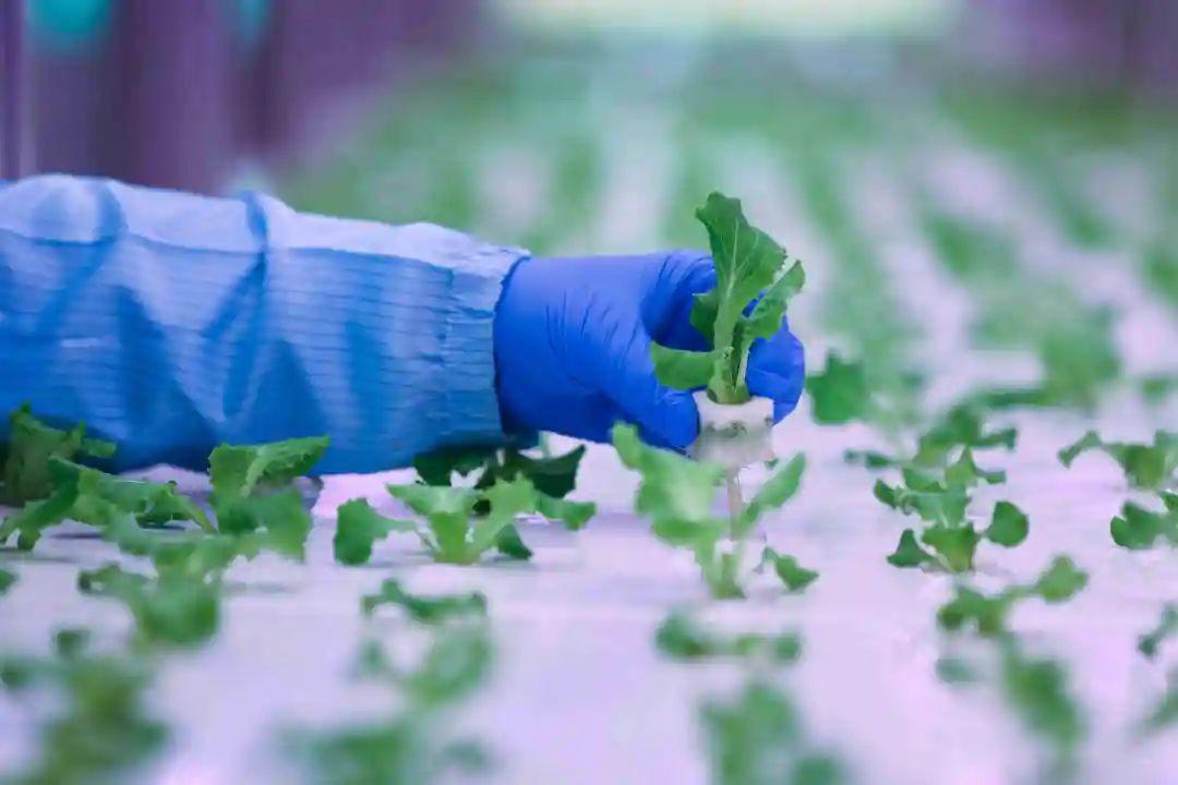 三农日报 国家试点育秧、烘干设施购置补贴;中国农药行业趋向规模化、集约化
