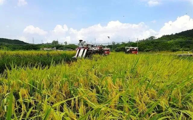 三农日报 我国支持大型种业龙头企业引领作用;我国绿色农药研发方面不足欧美