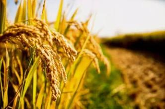 农药丨冬季用药需谨慎,这五点你一定得知道!