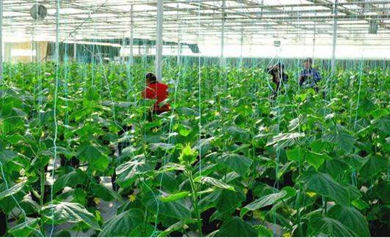 产业分析|共享农业:万亿级市场!新风口!要火!