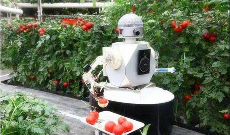 一家全靠机器人的农场是如何运转的?