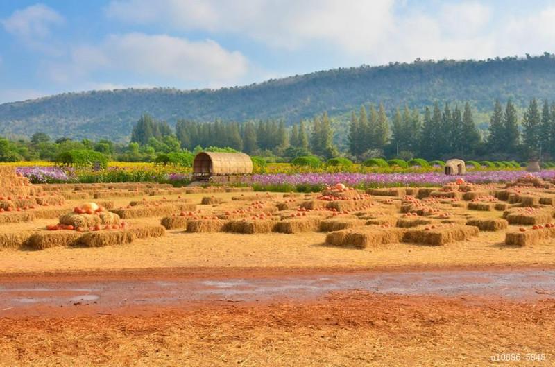 互联网时代下如何做好农场的经营管理?