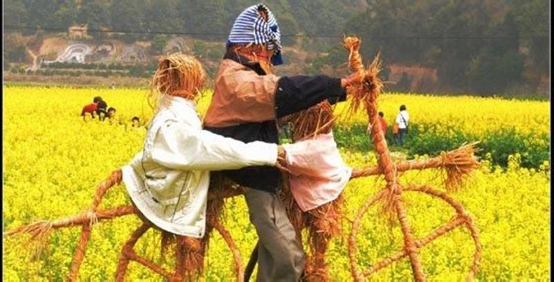 从家庭农场的收入来源看未来的家庭农场应该如何发展