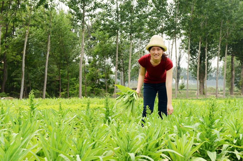案例|博士生留学美国,今成CSA农场创始人,她的成功秘诀是什么?