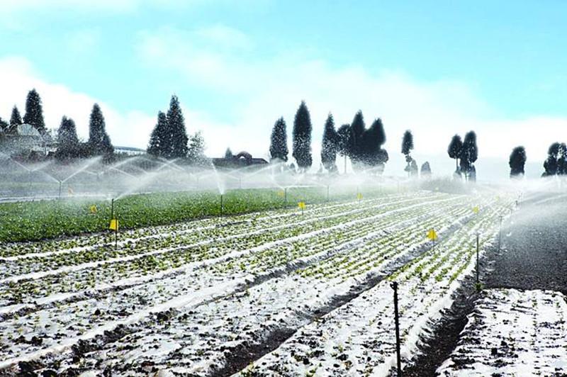 案例剖析|从君晖农场的失败,谈中国有机农业如何制胜未来