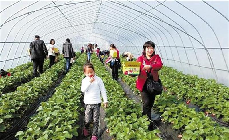 农村经理人谈为什么家庭农场难存活,关键不在于农场而在于市场
