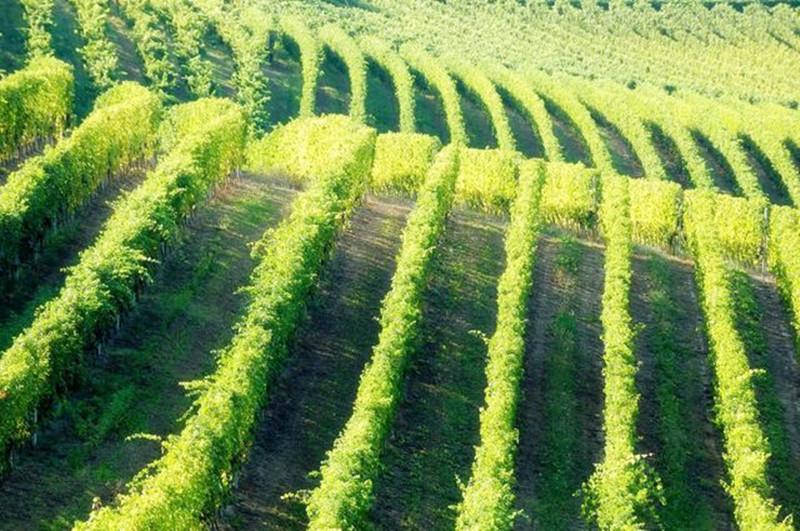 美国农场主的种地神器,国内农场主为什么不学着用?