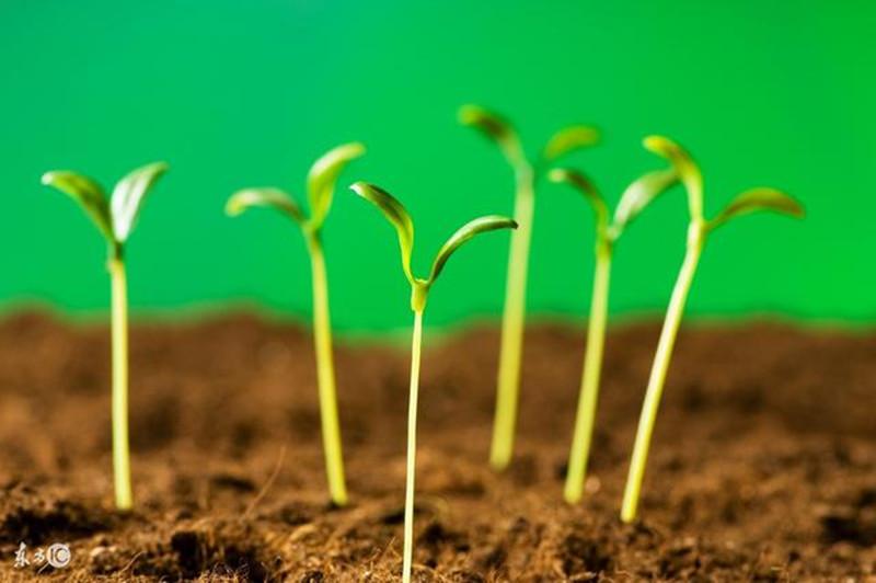 中国农业即将——党中央出台第一个关于农业绿色发展的文件