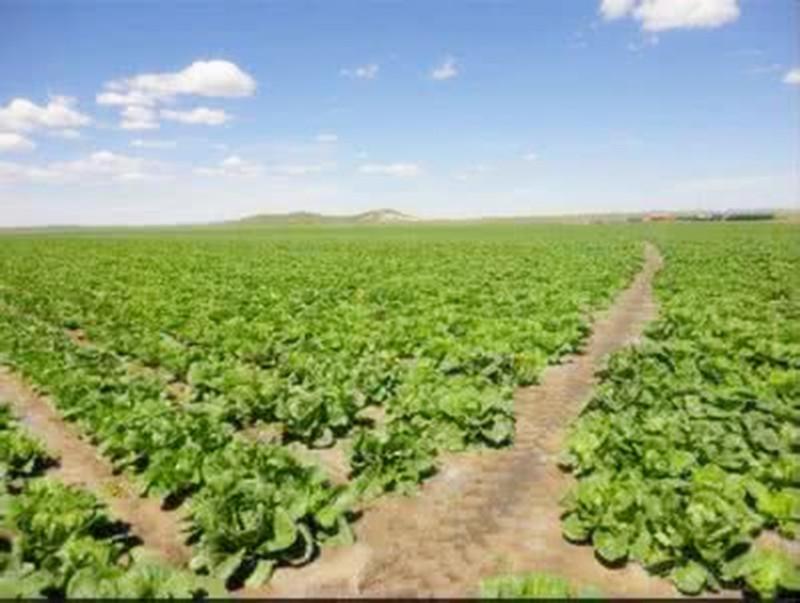 美国农场主最犯愁的滞销农产品问题解决,感谢中国消费者!