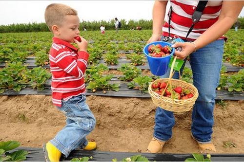 创业小黑板|家庭农场如何融资找钱:补贴、贷款、商业资本