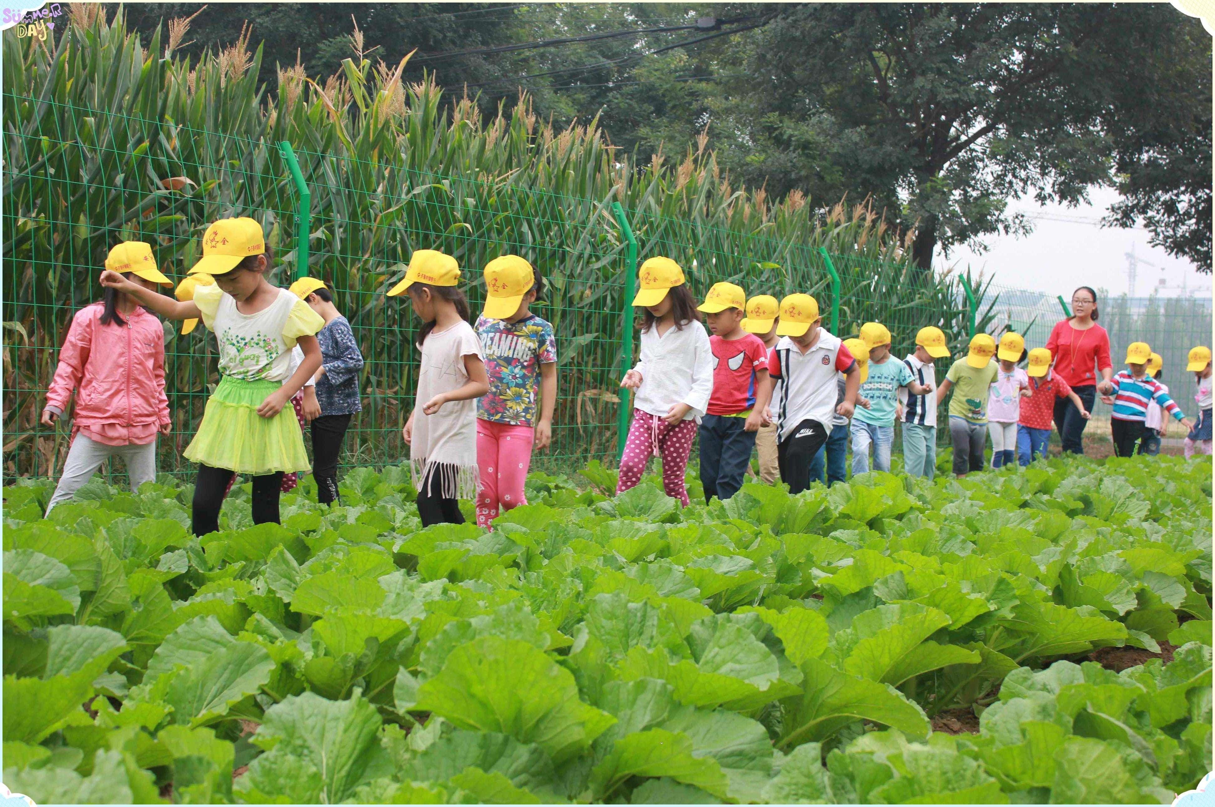 幼儿园+农场,另一种儿童教育打开模式?这些地方已经悄悄实现了……