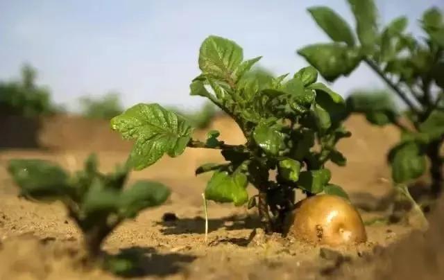 农场随便进、食物随便摘,关键是不要钱-共享农场或许不是梦