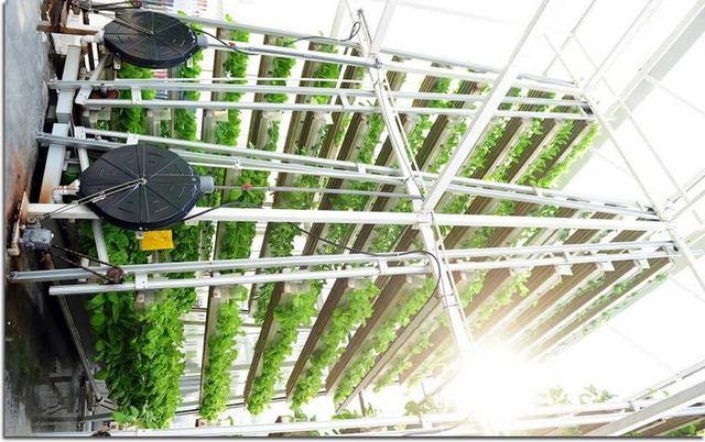 创业小黑板|啥叫垂直农场?农业下一站风口