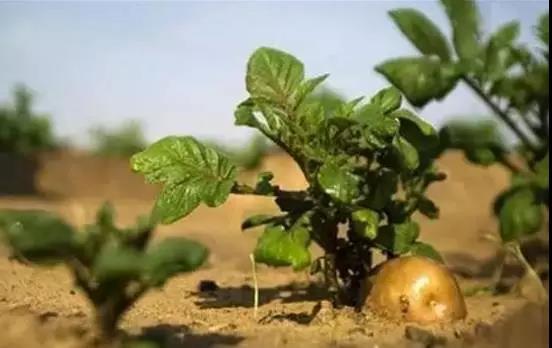 知识|农业影响世界的12种方式,你知道几个?