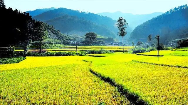 三农日报|中央财政支持规模家庭农场;玉米全托管服务的3种盈利模式