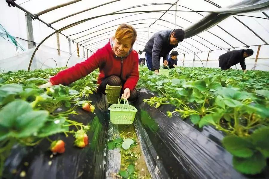 政策|农业农村部:鼓励土地经营权有序向家庭农场流转