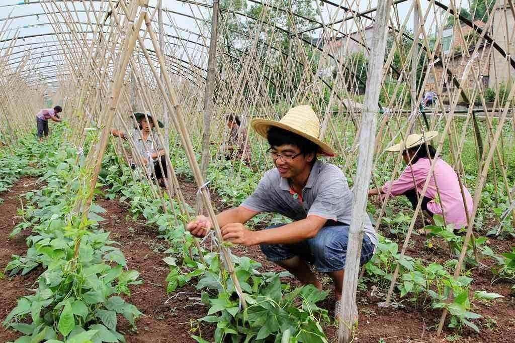 朝日绿源农场失败大解密:日本公司,5年未盈利、循环农业模式