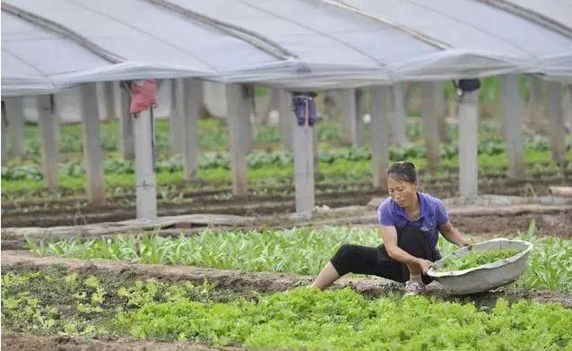为什么大农场农业在中国总是屡屡碰壁?到底什么模式才适合中国?