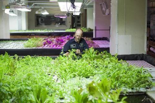 超级复盘!垂直农业:百亿级规模,小众市场、商业模式等待验证