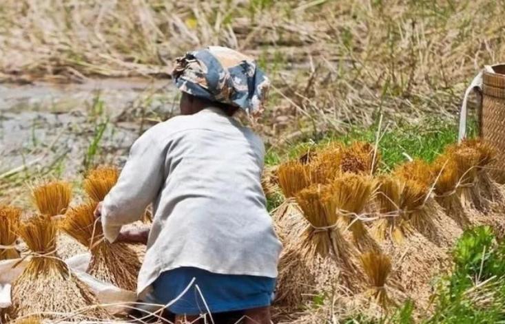 日本发展家庭农场的缘起、经验与启示