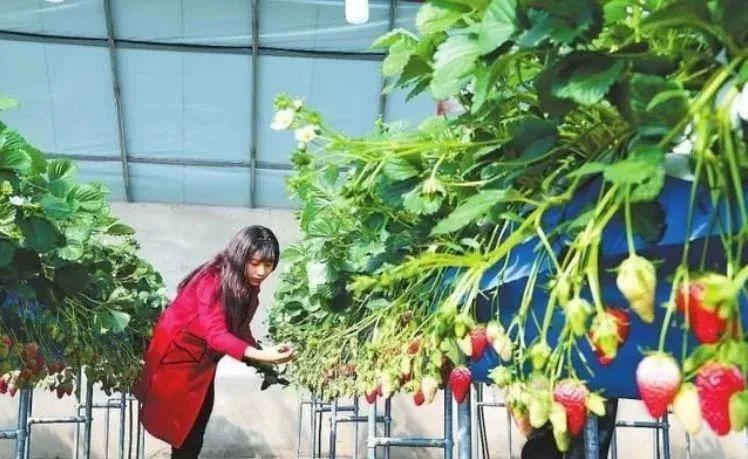 【家庭农场】日本发展家庭农场的缘起、经验与启示