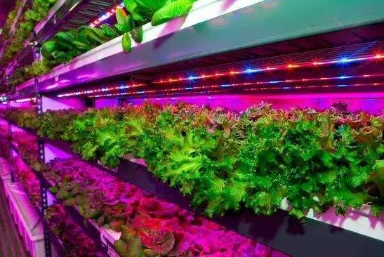 世界创业新风口:垂直农场