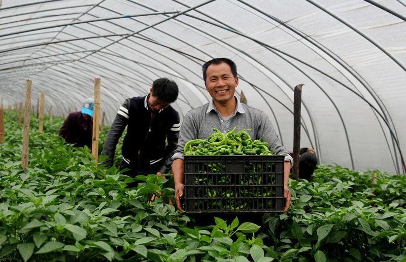 三农日报 国家鼓励家庭农场等跨越式发展;返乡创业者推动农村智慧农业发展