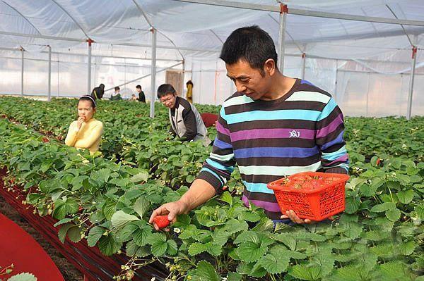 【政策解读】缺钱、缺人、缺技术?机会来了!国家重点扶持百万农业新型经营主体!
