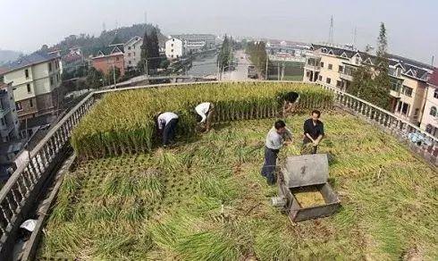 产业分析 从立体农业到垂直农场,这就是未来农业的样子