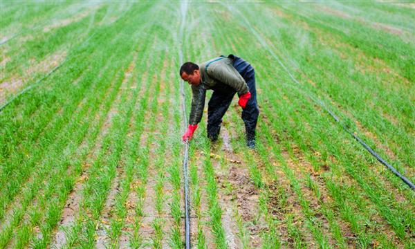 三农日报|报道:垂直农场3年内可回本;农业生产中的四大传统痛点