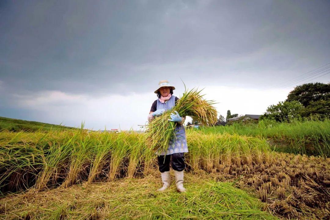 日本海外农业投资战略启示!