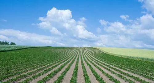 """【政策解读】新规鼓励小农户开办家庭农场,看准这3点,谁都能成为""""农场主""""!"""