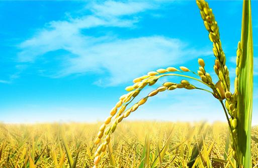 【国外农业】美国和日本农业规模化经营进程分析及启示