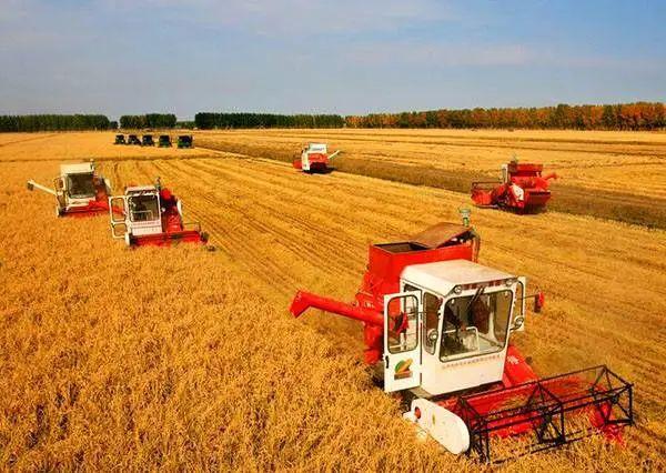 【行业分析】为什么大农场农业在中国总是屡屡碰壁?到底什么模式才适合中国?
