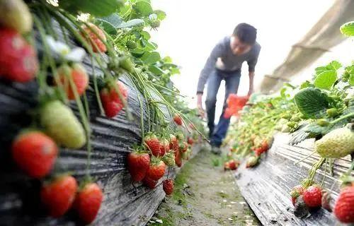 【报告】研究报告:我国家庭农场平均经营15块地、400亩,来自约50个农户