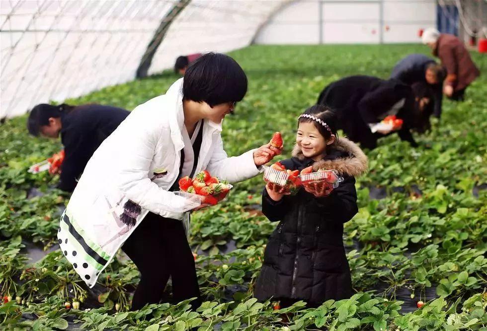【行业研究】经营家庭农场(合作社)的10个盈利模式