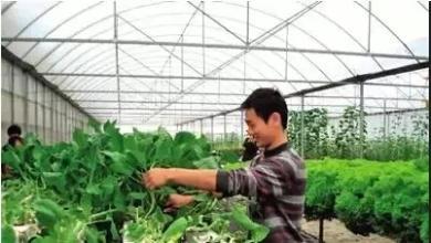 从负债150万到吸金3.3亿,这家家庭农场是如何做到的?