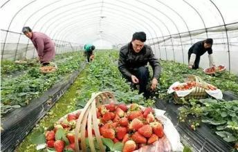 好多人可能都想不到,办家庭农场竟然给这么多补助?!