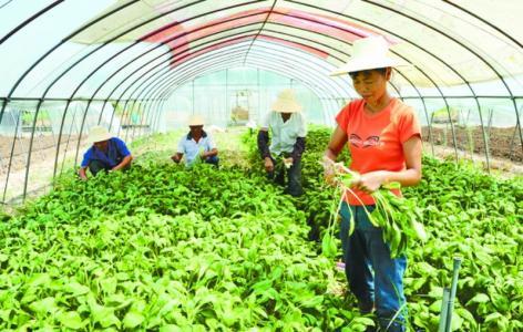 农业热点|农民怎样才能申办成家庭农场?
