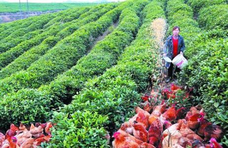 家庭农场怎样发展?我们需要做哪些?