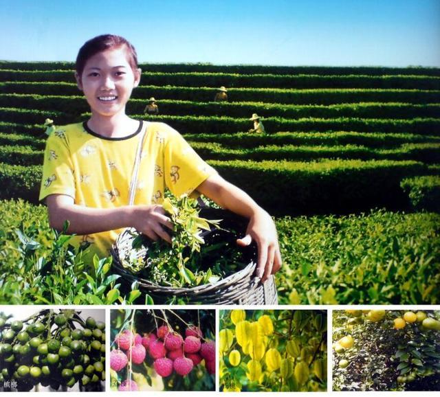 未来3年,国有农场全部实现社会化