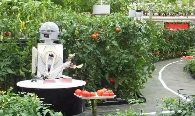 专家预测:未来30年将是大农业的天下;啥叫植物工厂