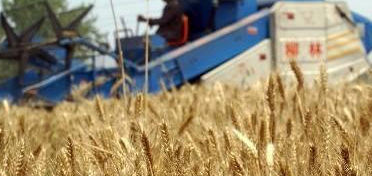 2017年粮食最低收购价公布!共涉及22个省份