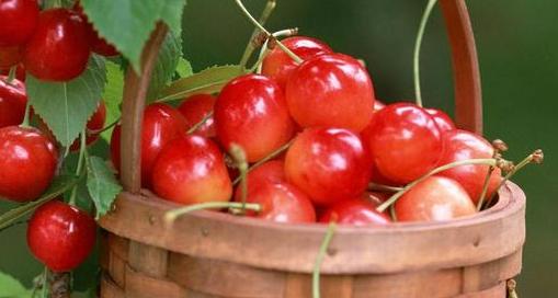 案例|靠供应链,他竟把樱桃卖出了3倍的高价!
