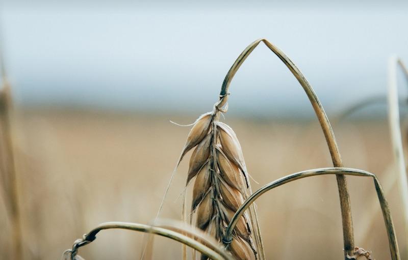 供应链金融是不是农业中小企的希望?