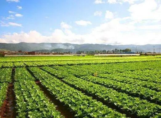 【产业剖析】什么是农业产业链?农业全产业链应该如何布局 ?