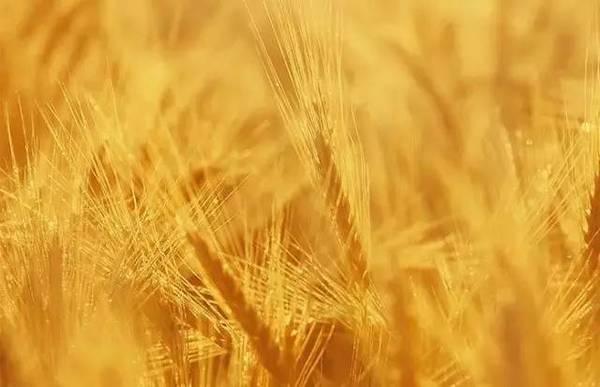 农业供应链金融风控难题如何破解?